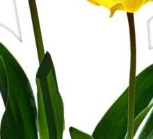 Backlit Yellow Tulips Sticker