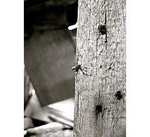 Secret Agent Spider Photographic Print
