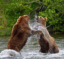 Brown Bear squabble by Michael S Nolan