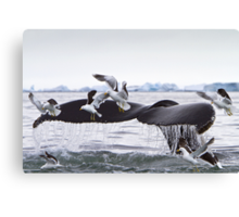 Humpback Whale going to the Birds! Canvas Print