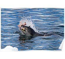 Leopard Seal Lunch! Poster