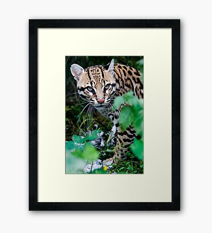 Oops......I've Been Spotted..... Framed Print