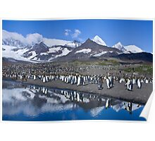 King Penguin reflections Poster
