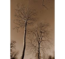 Sepia Tree #2 Photographic Print