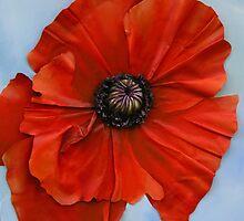 poppy I by cathy savels