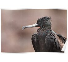 Great Frigatebird Poster