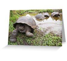 Galapagos Giant Tortoise Greeting Card