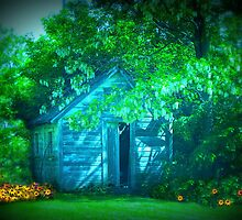 Old Shed And Daisies by Linda Miller Gesualdo