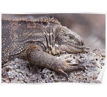 Hybrid Iguana Poster
