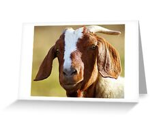I know.........!! I'm handsome!! Greeting Card