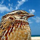QUAIL BIRDS    by Khaled EL Tangeer