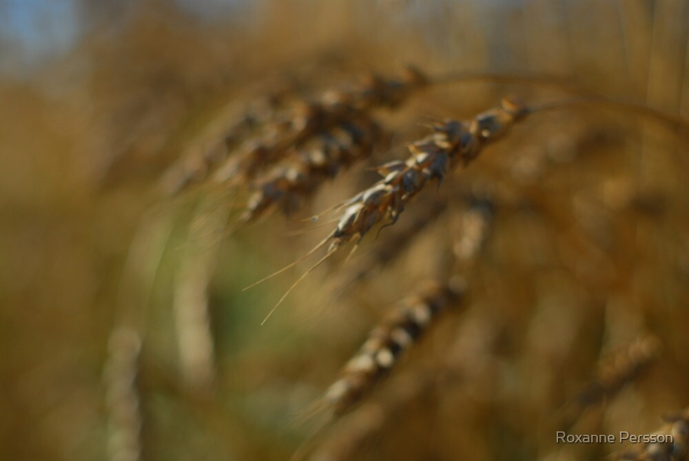 Harvest by Roxanne Persson