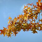 Indian Summer by Themis