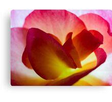 Begonia Petals   Macro Canvas Print