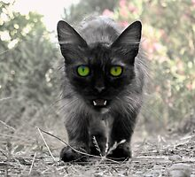 Stray Cat by pahit