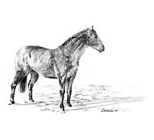 Appaloosa Winter Coat Photographic Print