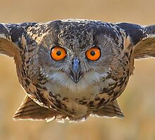 Kaln - Eagle Owl by barnowlcentre