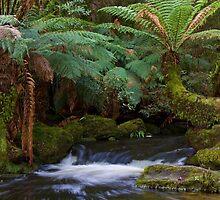 Rain Forest Creek by Ian Robertson