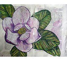 Magnolia I Photographic Print