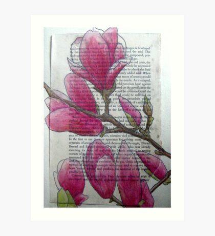Magnolias VII Art Print