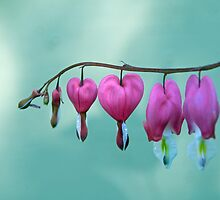 A String of Love by Susan Carter
