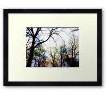 circle of trees Framed Print