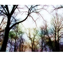 circle of trees Photographic Print
