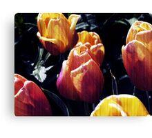 tulips wild Canvas Print