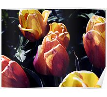 tulips wild Poster