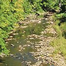Sandy Creek  by teresa731