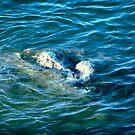 Secrets in the Water by lilynoelle