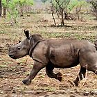 "*WHITE RHINOCEROS* - Ceratotherium simum - YES! I CAN DO IT ! (EVER SEEN A BABY RHINO... ""TAKE OFF"")   by Magaret Meintjes"