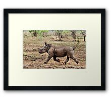 """*WHITE RHINOCEROS* - Ceratotherium simum - YES! I CAN DO IT ! (EVER SEEN A BABY RHINO... """"TAKE OFF"""")   Framed Print"""