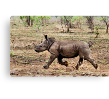 """*WHITE RHINOCEROS* - Ceratotherium simum - YES! I CAN DO IT ! (EVER SEEN A BABY RHINO... """"TAKE OFF"""")   Canvas Print"""