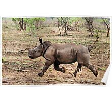 "*WHITE RHINOCEROS* - Ceratotherium simum - YES! I CAN DO IT ! (EVER SEEN A BABY RHINO... ""TAKE OFF"")   Poster"
