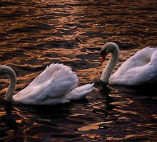 Always together (Swans)  by LudaNayvelt