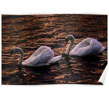 Always together (Swans)  Poster