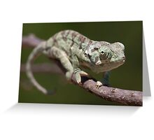 Flap-necked Chameleon 1 Greeting Card