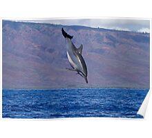 Hawaiian Spinner Dolphin Poster