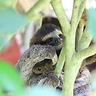 Sloth holding a Squirrel by ChrisJecs
