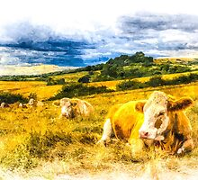 Resting Cows Art by DavidHornchurch