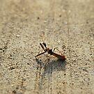 Praying Mantis by Jennifer Suttle