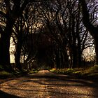 Bregagh Road by paws4life
