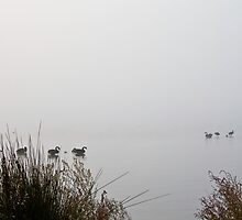Swans in the mist by pennyswork