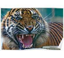 Do not Disturbed the Tiger Poster
