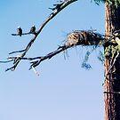 Golden Eagle Perch by James Zickmantel