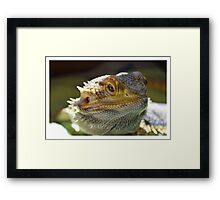 Dragon Thoughts Framed Print
