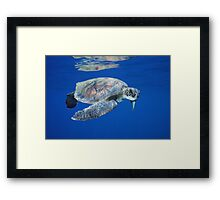 Reflections of a Turtle Framed Print