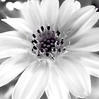White Flower by Komang