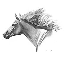 Wind in His Mane Photographic Print